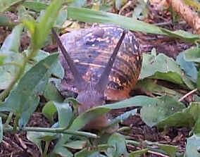 Tout ce qu'il faut savoir sur les escargots