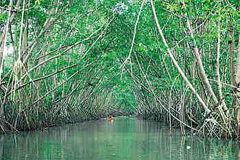 À la chasse en Martinique