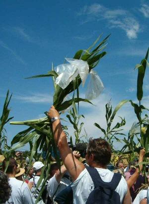 La France adopte une loi sur les organismes génétiquement modifiés