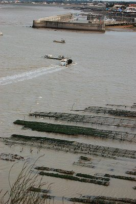 Nos huîtres sont menacées