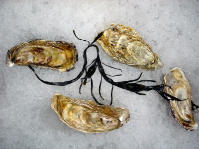 Entretien : Et si vous goûtiez les huîtres ?